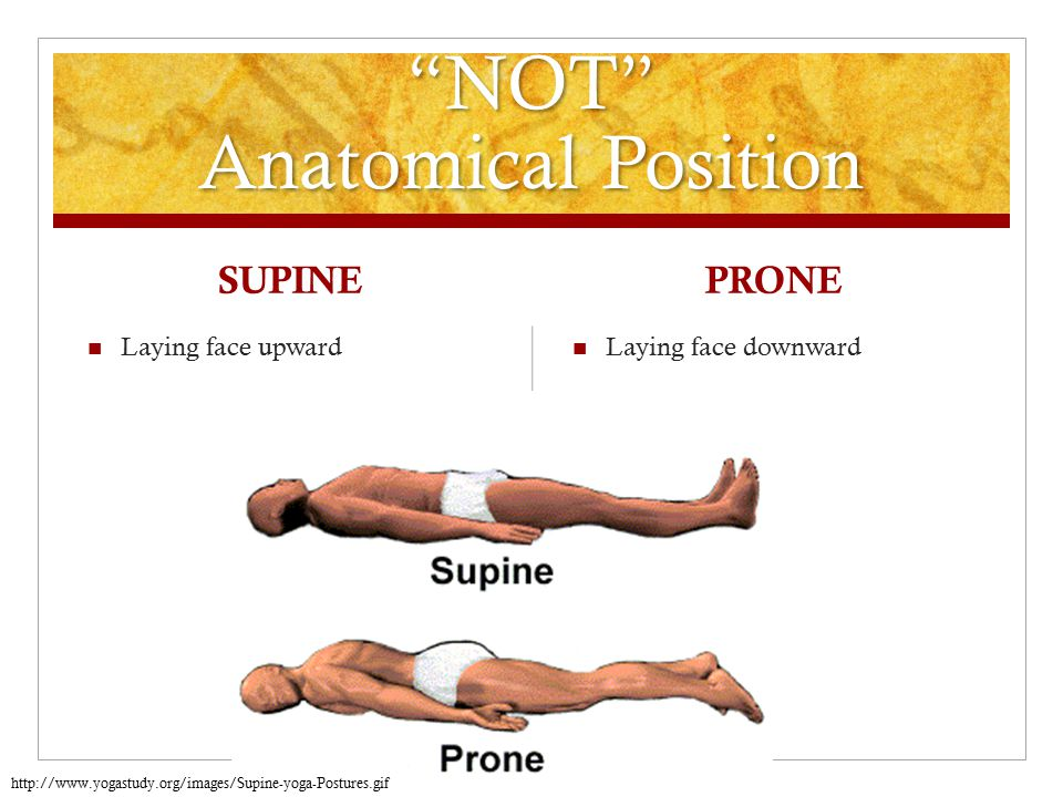 Definition of supine in anatomy