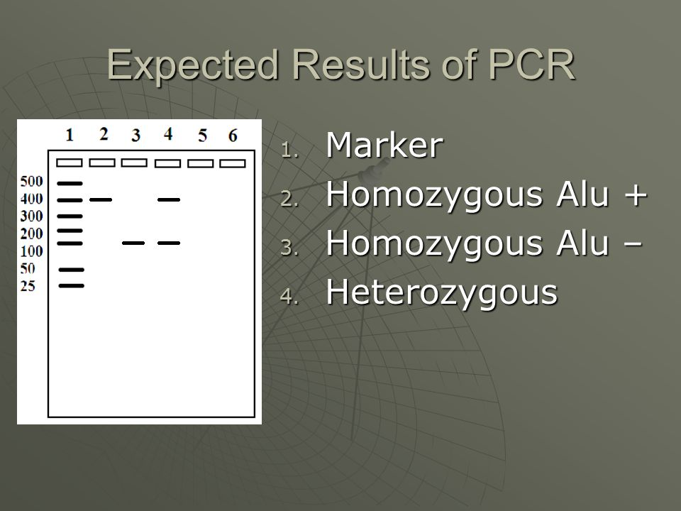 Expected Results of PCR