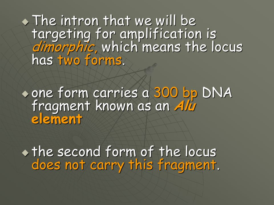The intron that we will be targeting for amplification is dimorphic, which means the locus has two forms.