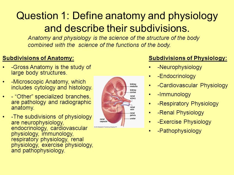 Human Anatomy and Physiology PowerPoint - ppt video online download