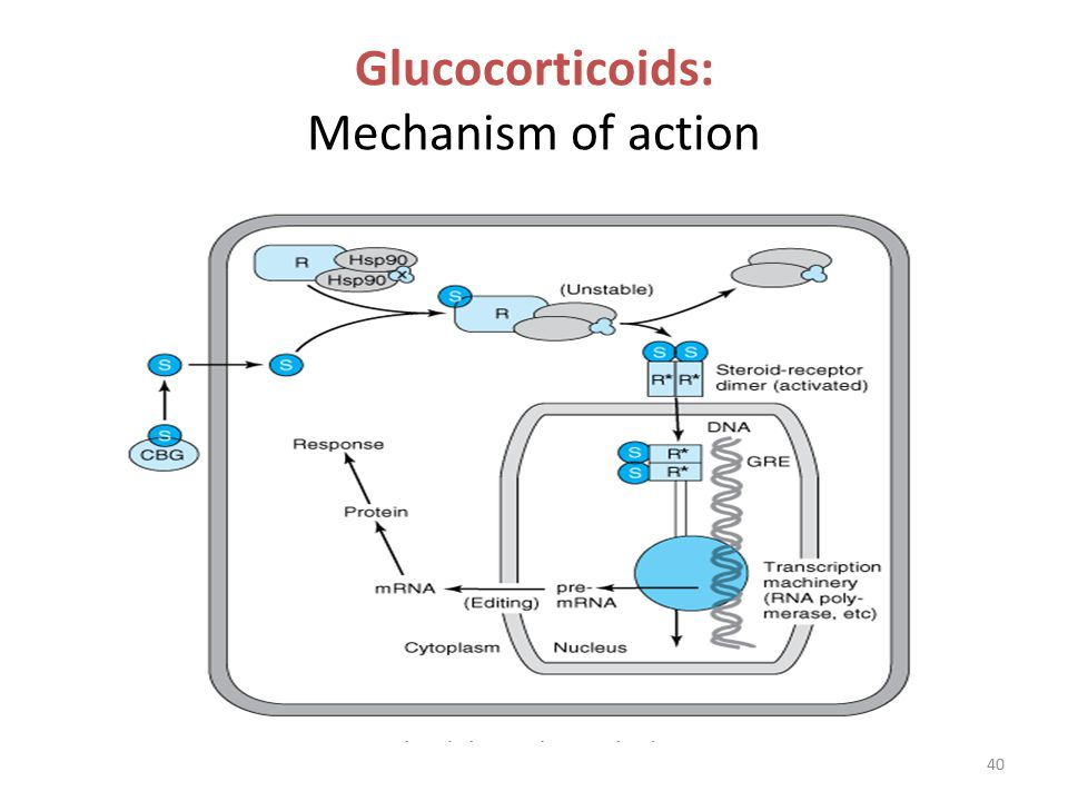dexamethasone mechanism of action pdf