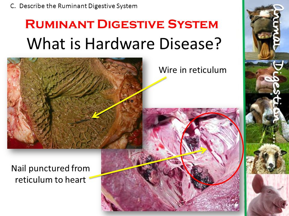 what is hardware disease