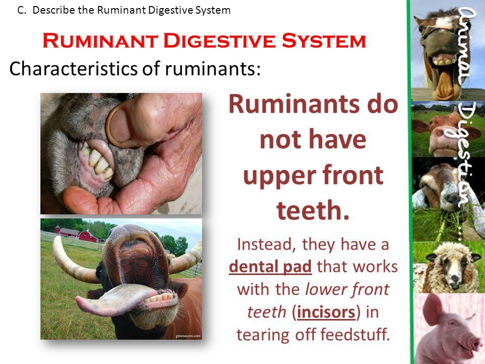 digestive system of ruminants pdf
