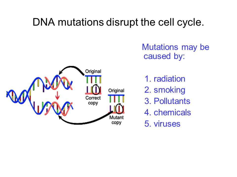 DNA mutations disrupt the cell cycle.