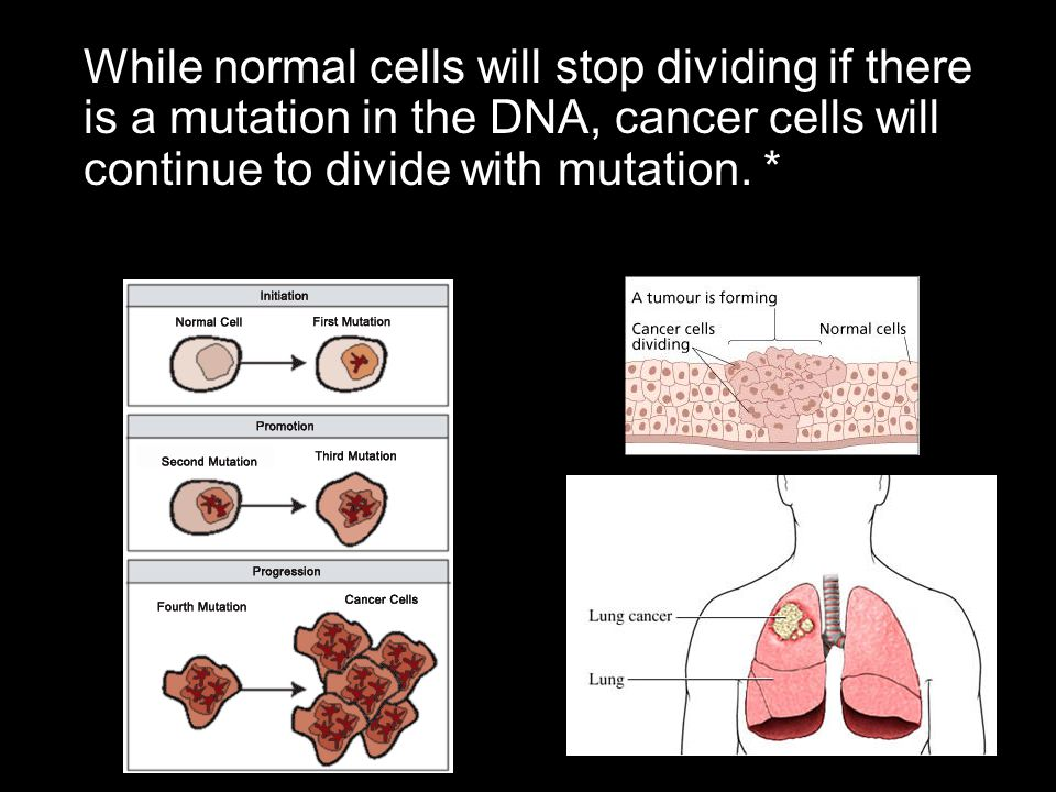 While normal cells will stop dividing if there is a mutation in the DNA, cancer cells will continue to divide with mutation.