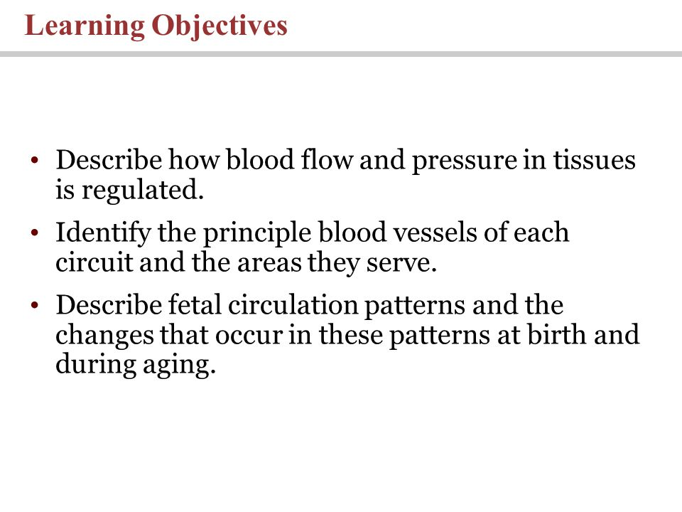 Lecture 21 Blood Vessels And Circulation Ppt Video Online Download