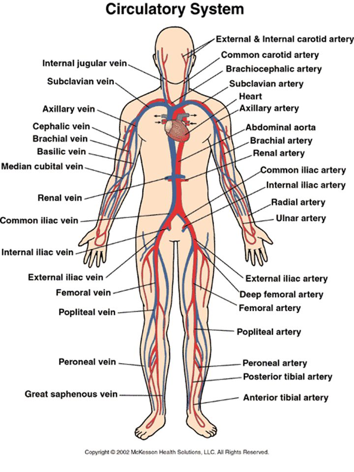 The Human Circulatory System Ppt Video Online Download