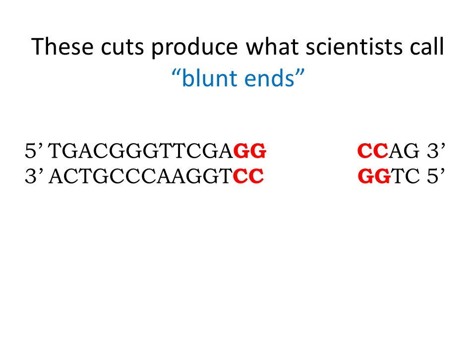These cuts produce what scientists call blunt ends