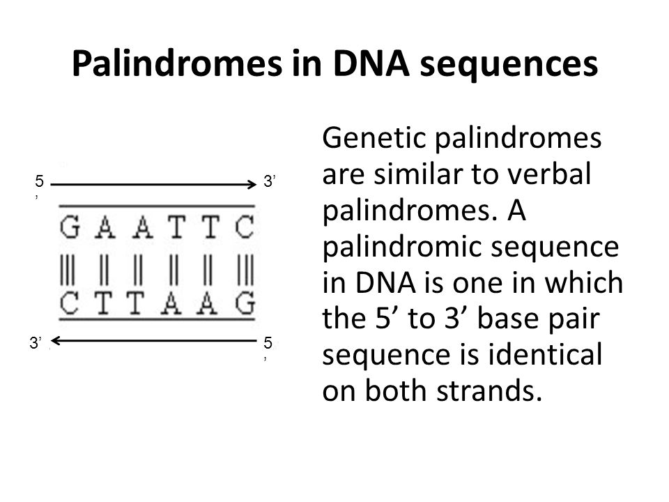 Palindromes in DNA sequences