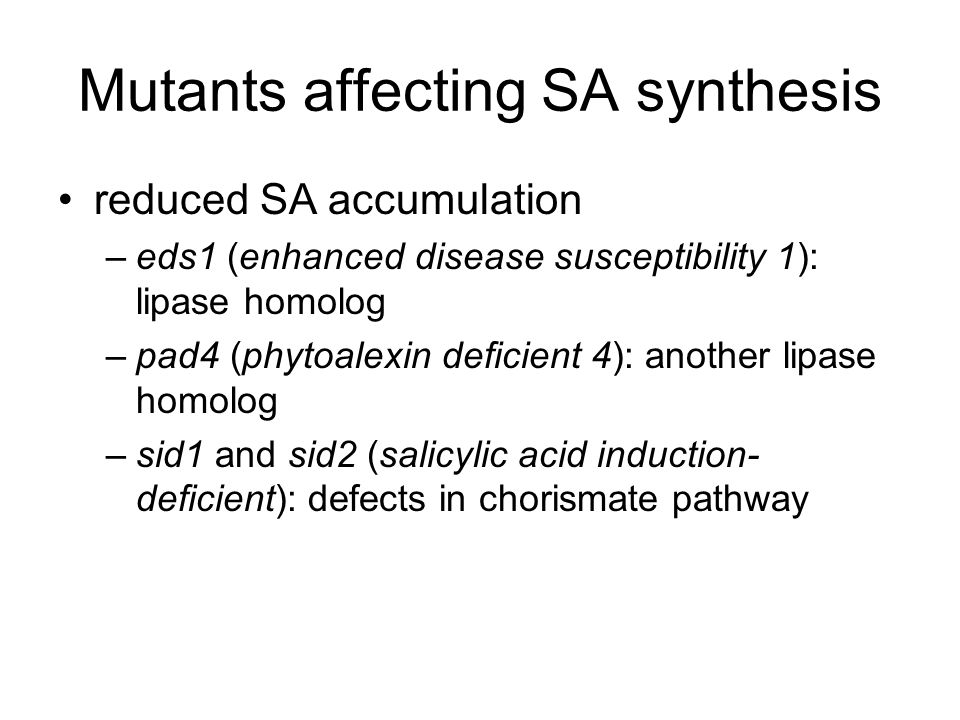 Mutants affecting SA synthesis