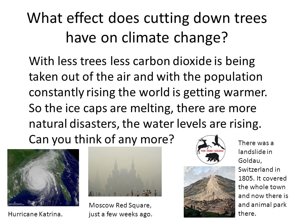 climate change effects on trees