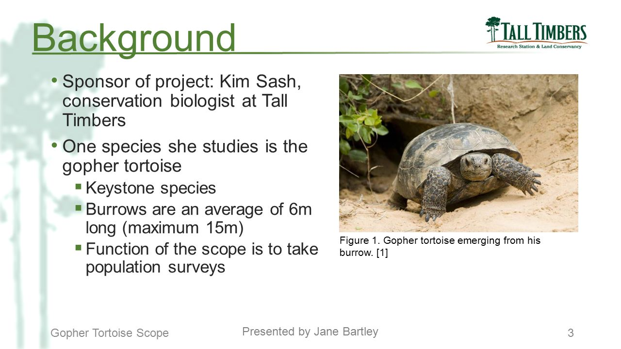 The Gopher Tortoise Scope - ppt download