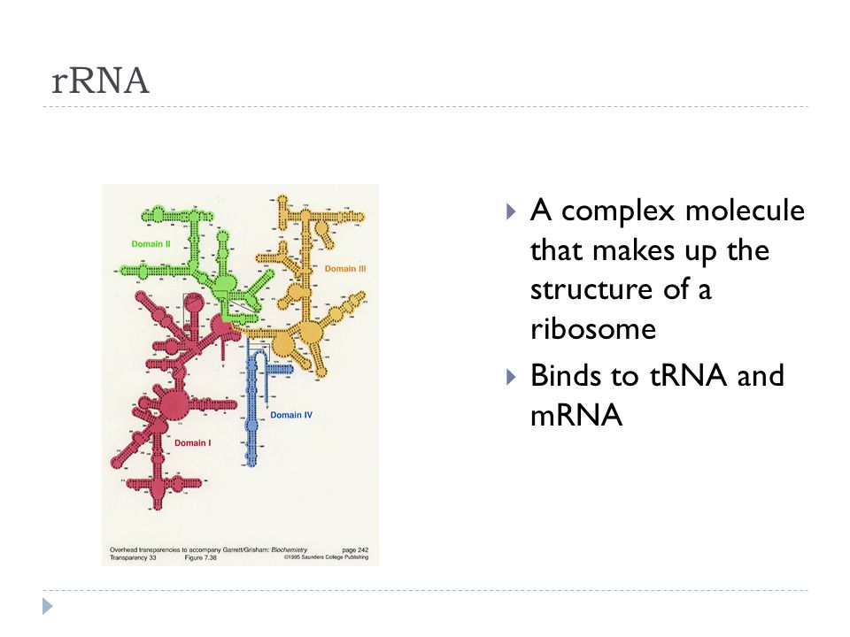 rRNA A complex molecule that makes up the structure of a ribosome