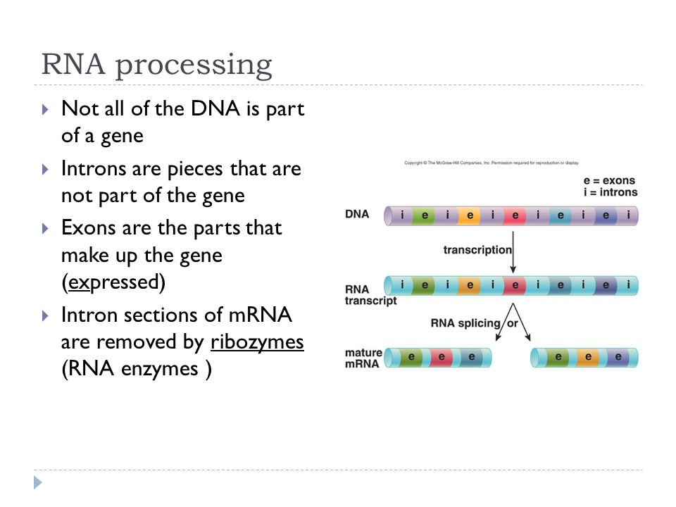 RNA processing Not all of the DNA is part of a gene