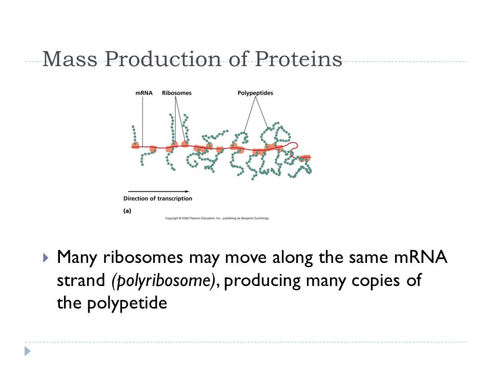 Mass Production of Proteins
