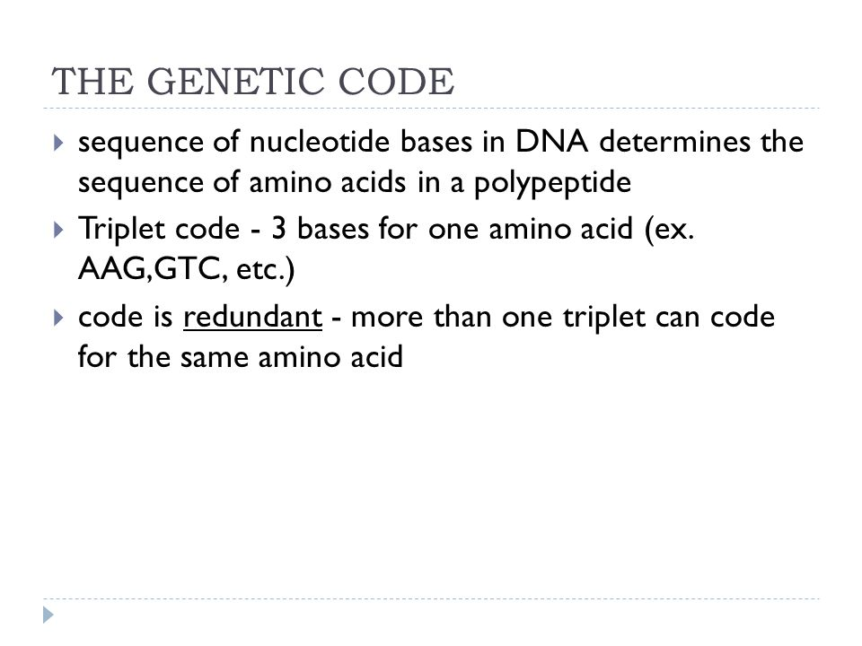 THE GENETIC CODE sequence of nucleotide bases in DNA determines the sequence of amino acids in a polypeptide.