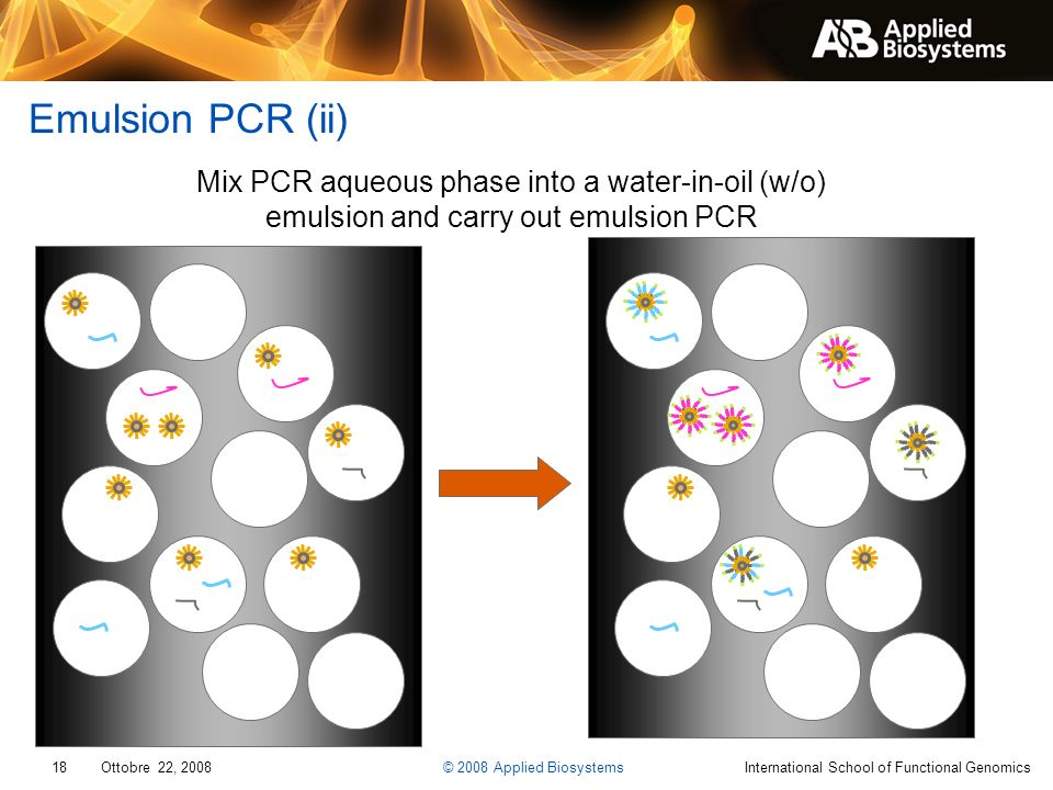 Emulsion PCR (ii) Mix PCR aqueous phase into a water-in-oil (w/o) emulsion and carry out emulsion PCR.