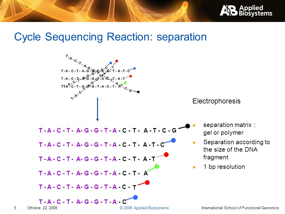 Cycle Sequencing Reaction: separation