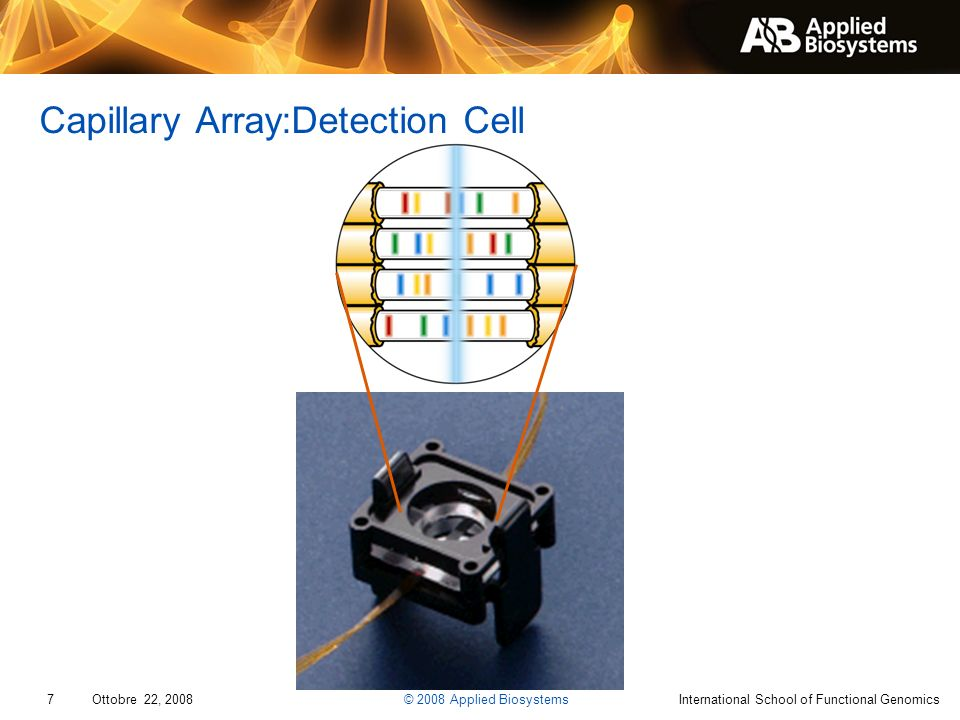 Capillary Array:Detection Cell