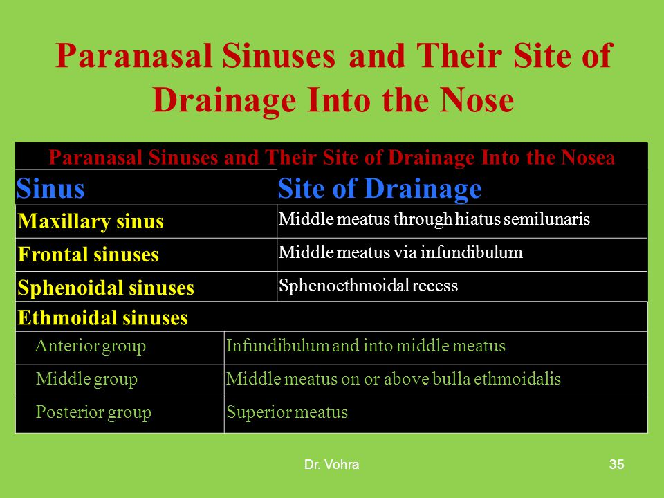 NASAL CAVITY AND PARANASAL SINUSES - ppt video online download