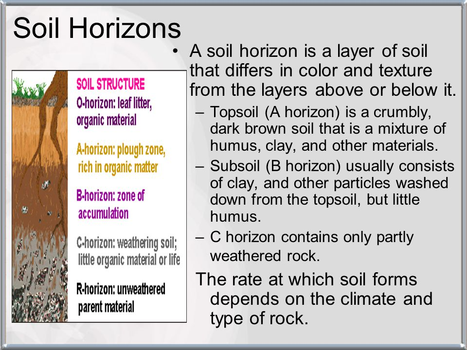 Soil Horizons A soil horizon is a layer of soil that differs in color and texture from the layers above or below it.