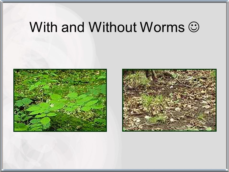 With and Without Worms 
