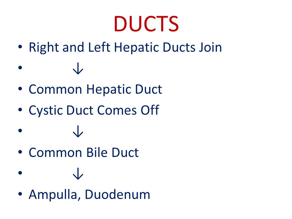 DUCTS Right and Left Hepatic Ducts Join ↓ Common Hepatic Duct