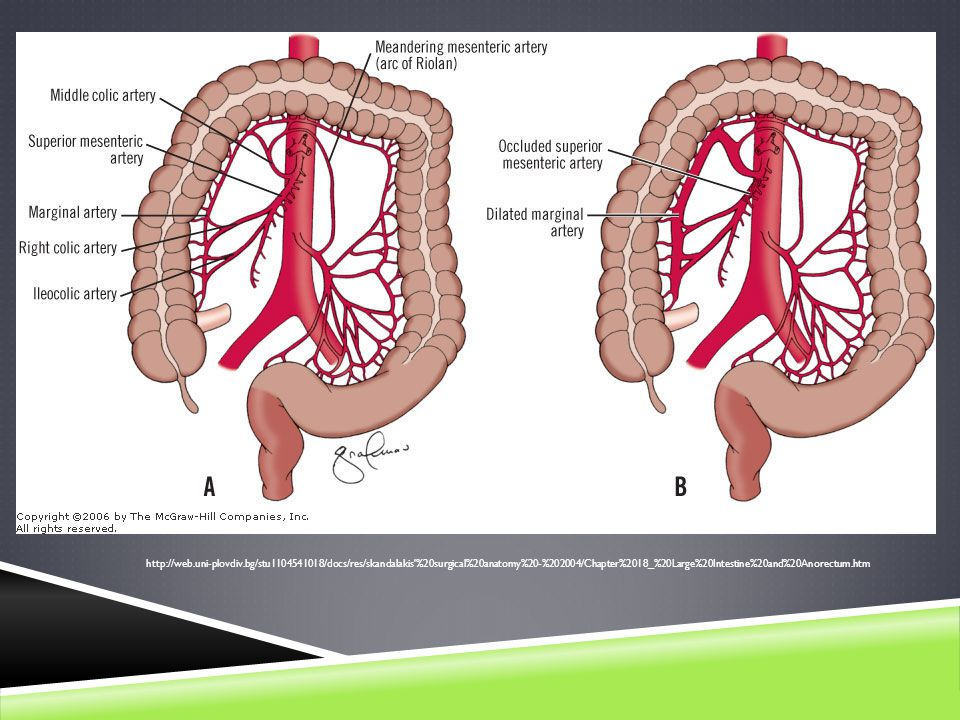 Clinical Nutrition Management Of Superior Mesenteric Artery