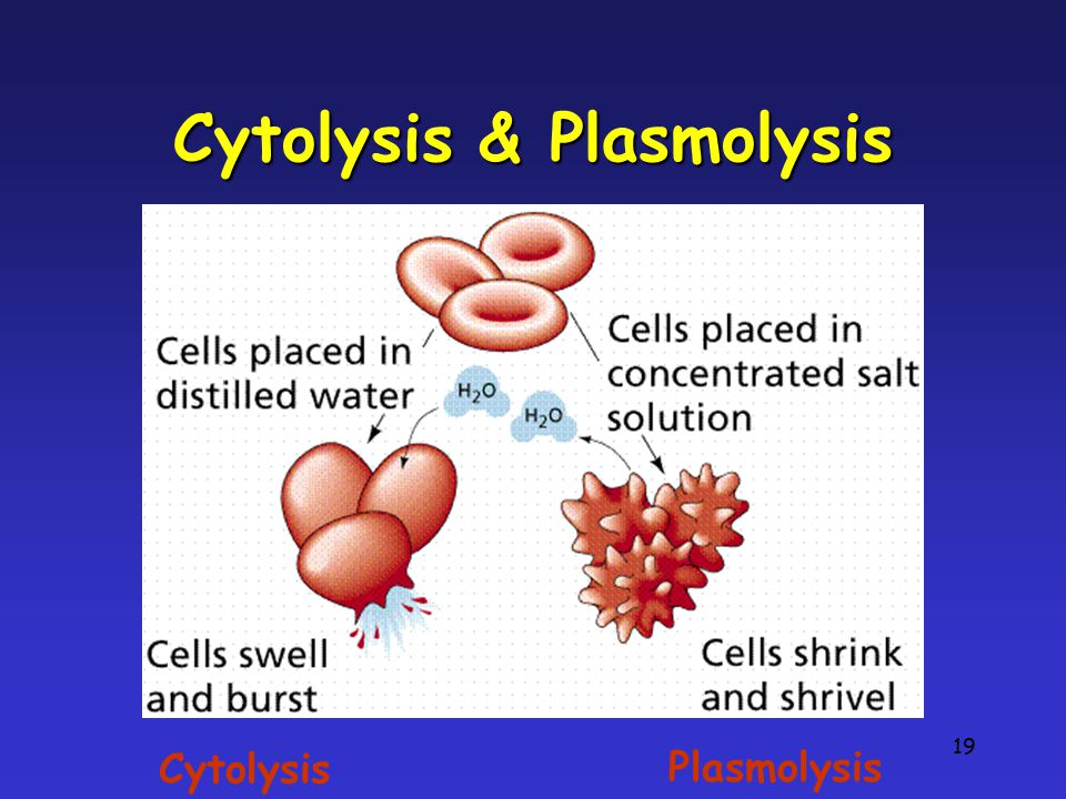 Cytolysis & Plasmolysis