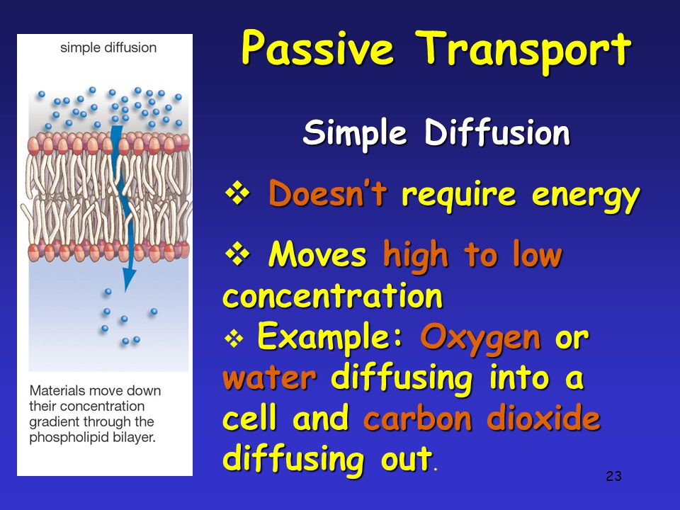 Passive Transport Simple Diffusion Doesn't require energy