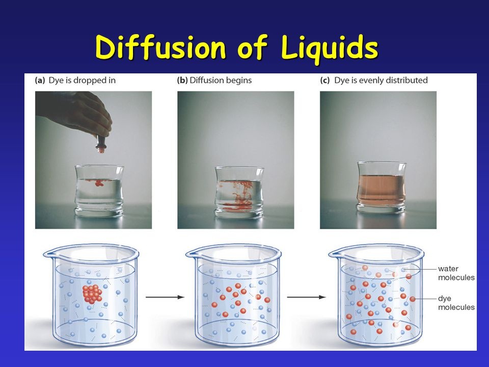 Diffusion of Liquids The Plasma Membrane 4/19/2017