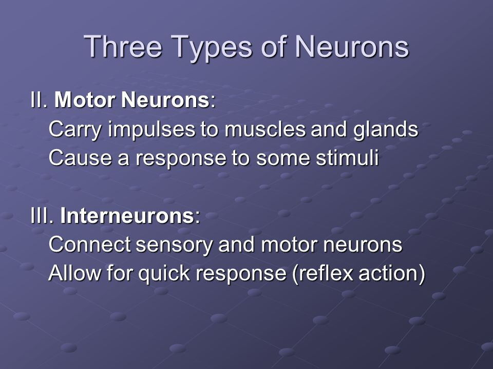 Three Types of Neurons II. Motor Neurons: