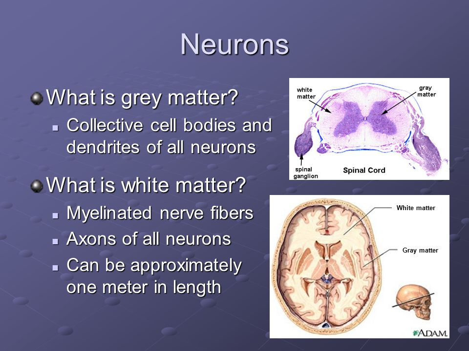 Neurons What is grey matter What is white matter