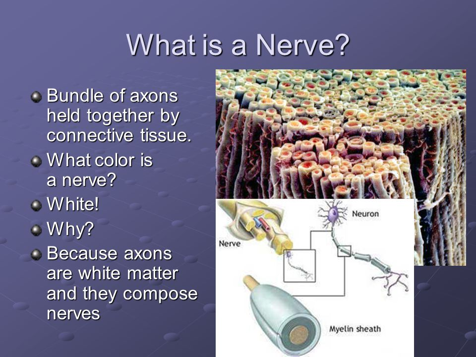 What is a Nerve Bundle of axons held together by connective tissue.