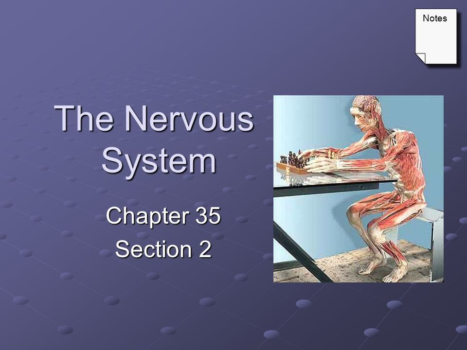 Notes The Nervous System Chapter 35 Section 2