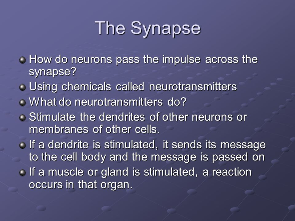 The Synapse How do neurons pass the impulse across the synapse