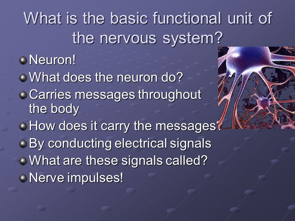 What is the basic functional unit of the nervous system