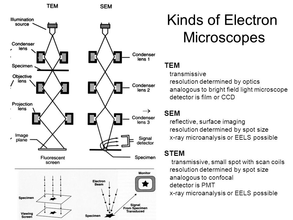 Transmission electron microscopy ppt video online download kinds of electron microscopes ccuart Gallery