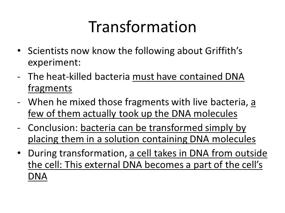 Transformation Scientists now know the following about Griffith's experiment: The heat-killed bacteria must have contained DNA fragments.