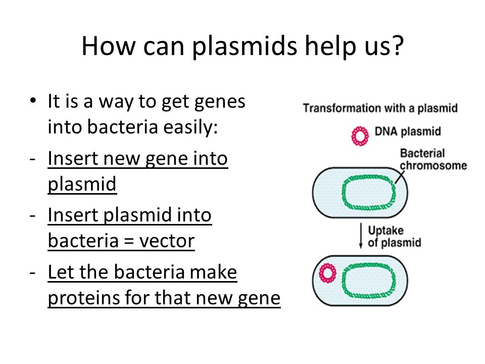 How can plasmids help us