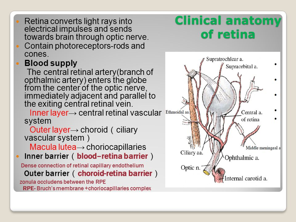Retina and retinal vascular diseases - ppt download