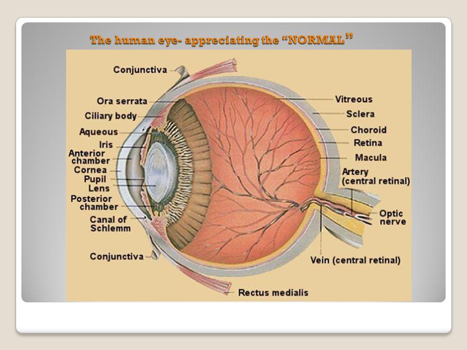 Retina 1 Clinical anatomy and retinal Micro-circulation 2 ...