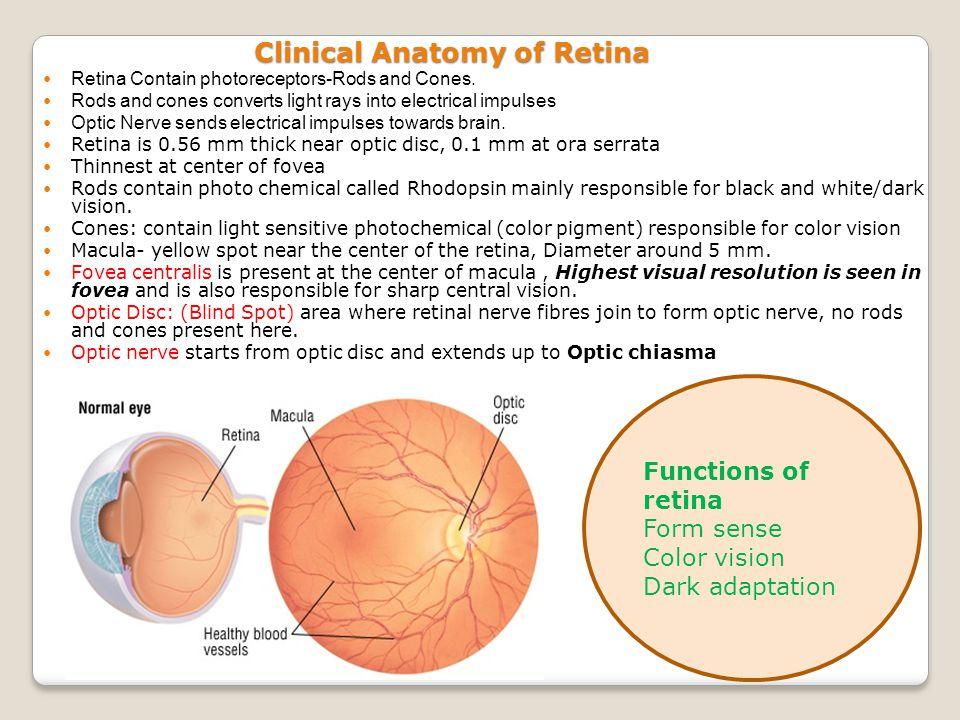 Retina 1 Clinical Anatomy And Retinal Micro Circulation 2