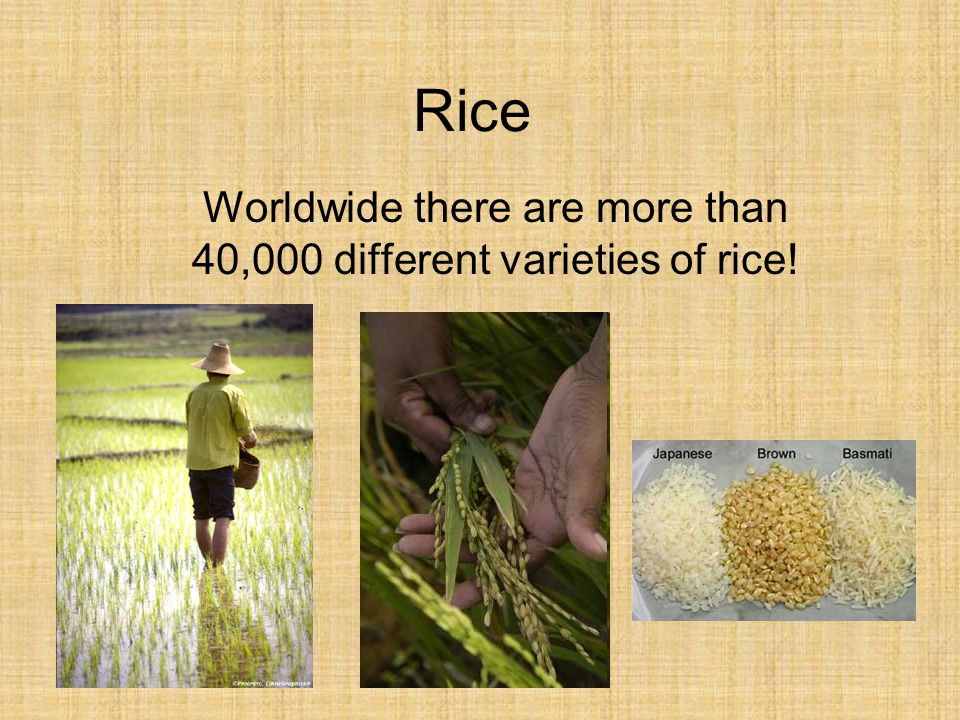 Worldwide there are more than 40,000 different varieties of rice!