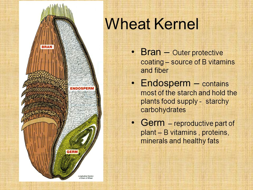 Wheat Kernel Bran – Outer protective coating – source of B vitamins and fiber.