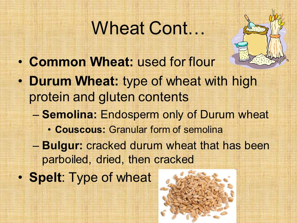 Wheat Cont… Common Wheat: used for flour