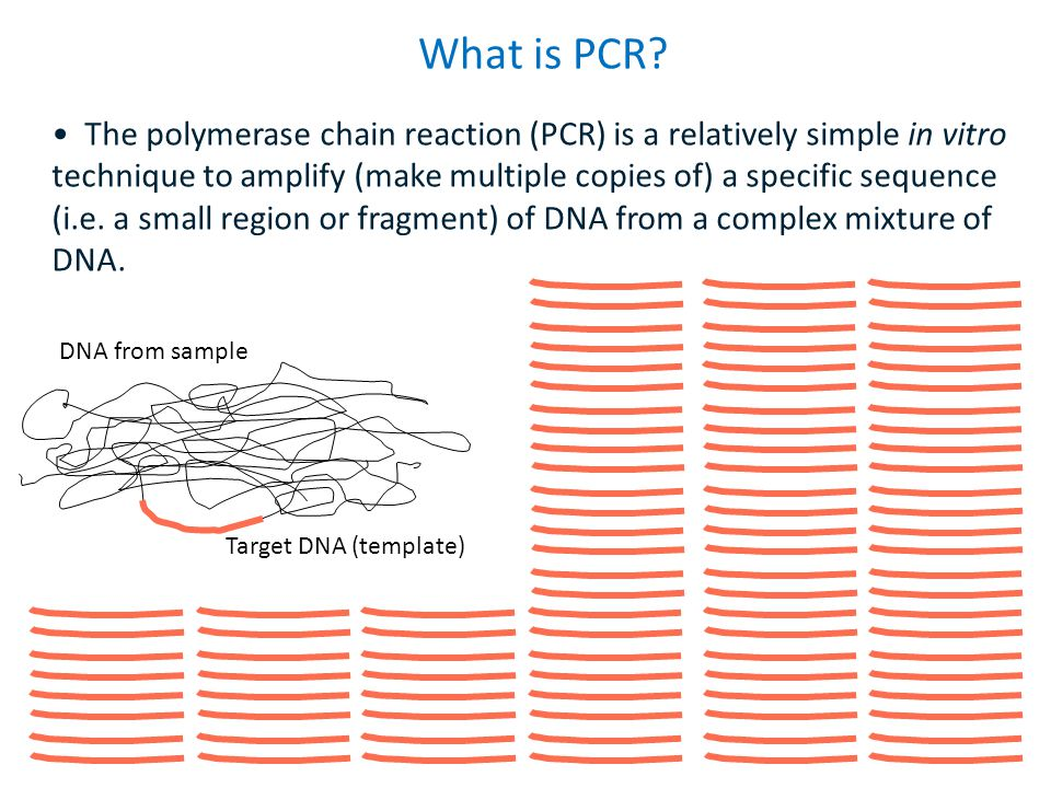 What is PCR