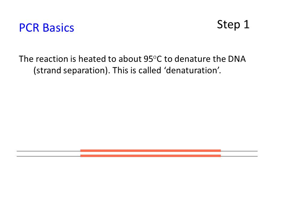 Step 1 PCR Basics. The reaction is heated to about 95oC to denature the DNA (strand separation).