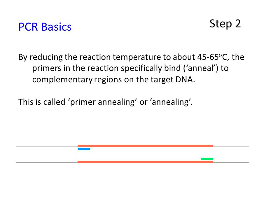 Step 2 PCR Basics.