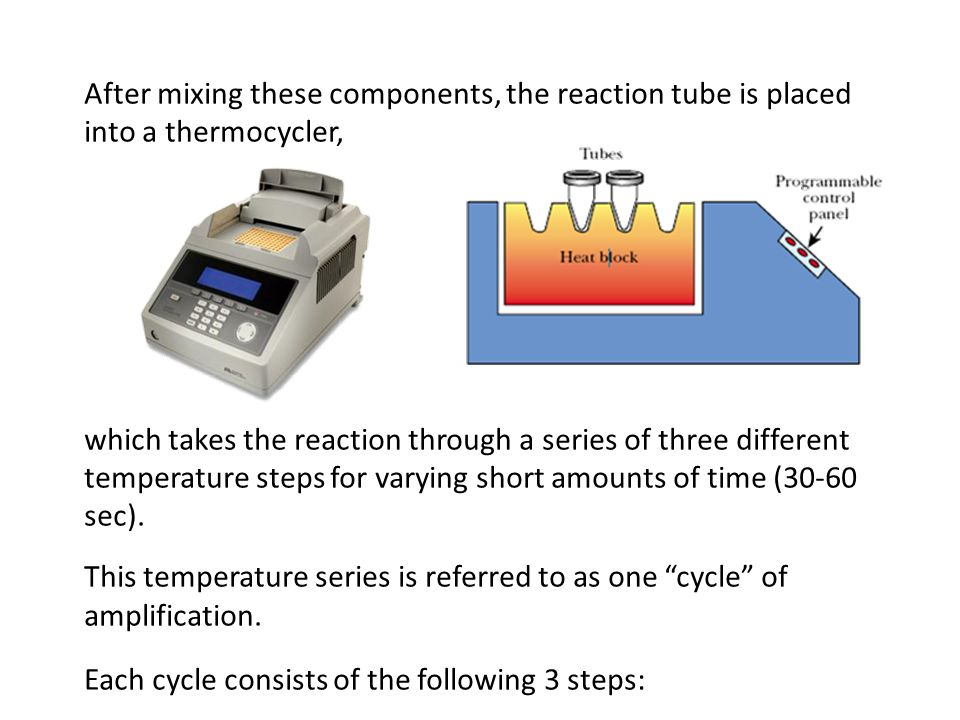 After mixing these components, the reaction tube is placed into a thermocycler,
